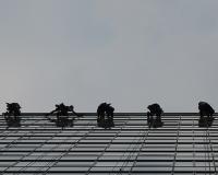 Čistenie okennej fasády